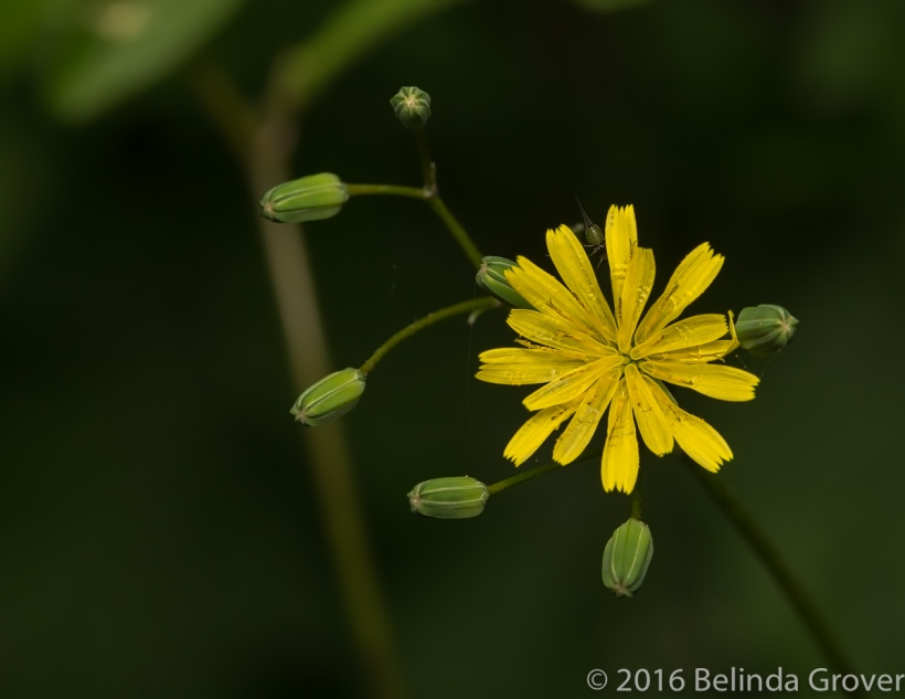 Wild flower - 2