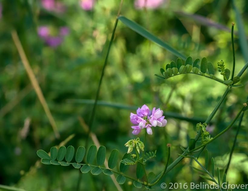 Wildflower - 2