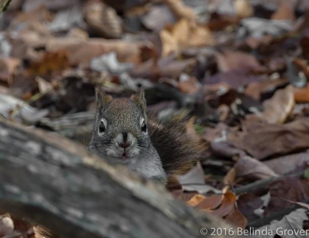 Squirrel -2