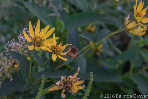 fall-flowers-1