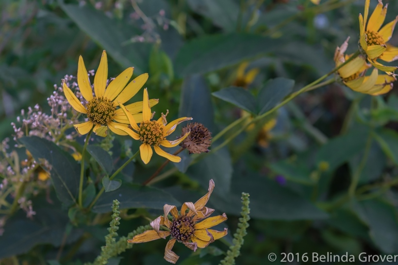 fall-flowers-1