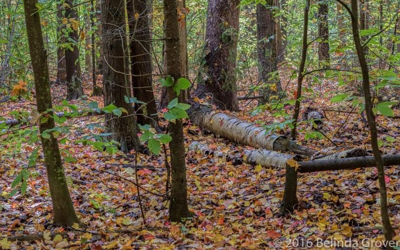 woods-2