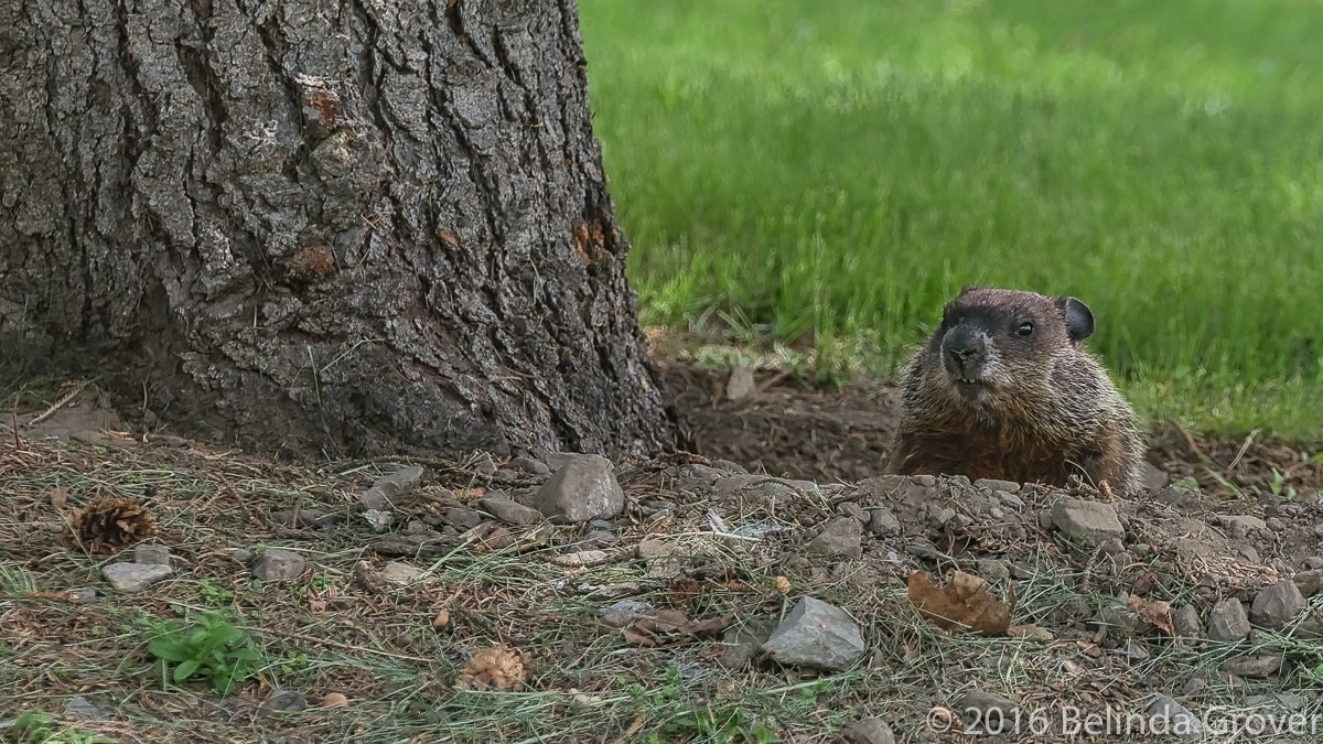 ground-hog-2