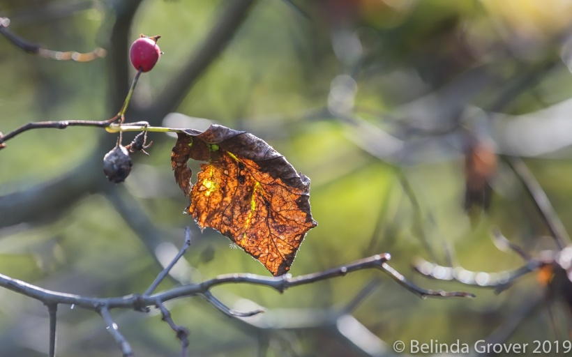Fall Leaves 1-3