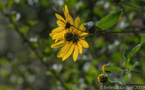 Summer Flowers-2
