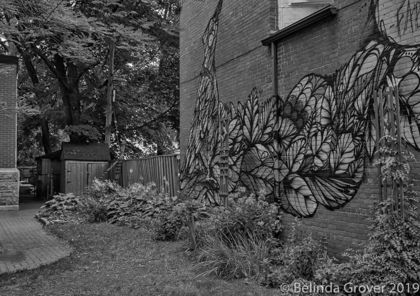 Bird on wall-2