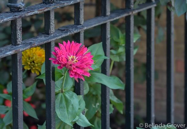 Garden Flowers-2
