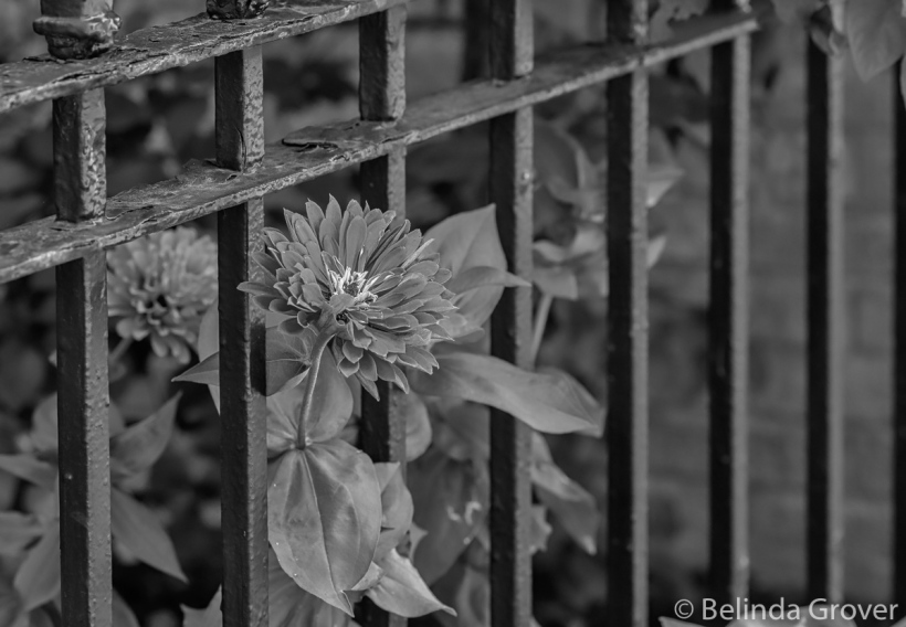 Garden Flowers-3